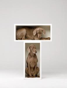 """Split Level"" by William Wegman."